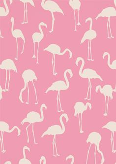 Maria Accardi Flamingos Wallpaper Pink white flamingoes on a pink Flamingo Wallpaper, Flamingo Art, Print Wallpaper, Trendy Wallpaper, Pink Flamingos, Pattern Wallpaper, Cute Wallpapers, Iphone Wallpaper, Fashion Wallpaper