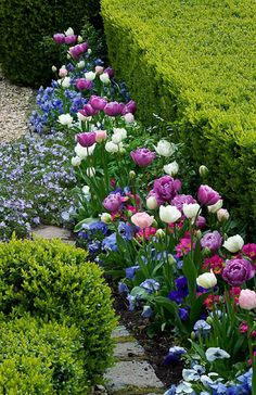 Tulips and pansies with shrub borders. Great companion plants - liked the linear look for our driveway embankment. Tulips Garden, Garden Bulbs, Garden Shrubs, Garden Landscaping, Planting Flowers, Flower Plants, Beautiful Gardens, Beautiful Flowers, Shade Shrubs