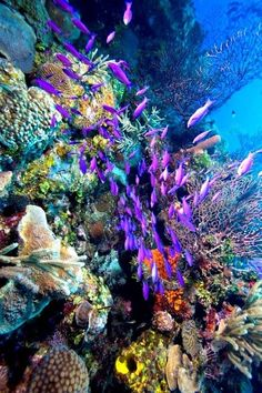 Glover's Reef Atoll, Belize