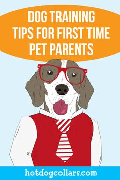 Dog Training Tips for First Time Pet Parents! Check Out this dog infographic! https://www.hotdogcollars.com/blog/dog-training-tips-infographic?utm_source=pinterest&utm_medium=organic&utm_campaign=SCL-pinterest#.VVX2amTBzRZ