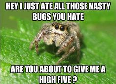 We forget about the dirty deeds that spiders do for us.