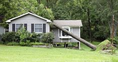 Got trees near your house? Your insurance probably won't leave you out on a limb.