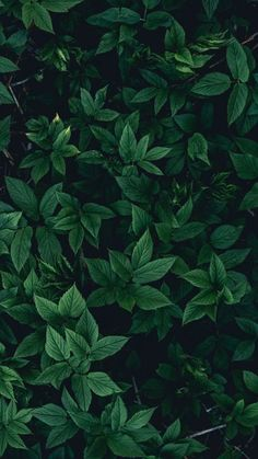 The latest iPhone11, iPhone11 Pro, iPhone 11 Pro Max mobile phone HD wallpapers free download, leaves, bushes, green, dark - Free Wallpaper   Download Free Wallpapers