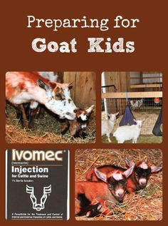 Describes basic preparations to make in support of goat kidding.