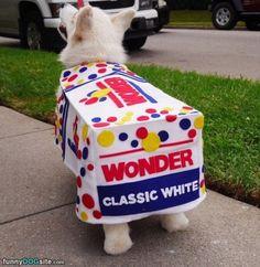 The Wonder Dog http://www.funnydogsite.com/pictures/The_Wonder_Dog.htm?utm_source=rss&utm_medium=Sendible&utm_campaign=RSS