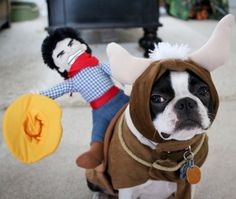 rodeo :) //a bulldog and a plush :D Pet Halloween Costumes, Pet Costumes, Costume Ideas, Dog Halloween, Bull Rider Costume, Bulldogs, Funny Animals, Cute Animals, Baby Animals