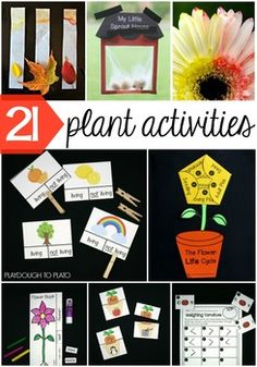 21 Must-Try Plant Life Cycle Activities for Kids! Make a sprout house, try your hand at leaf chromatography, turn a flower not one but TWO colors and more! So many ideas for a plant unit or spring theme. Spring Activities, Kindergarten Activities, Science Activities, Activities For Kids, Primary Science, Sequencing Activities, Playdough To Plato, Preschool Garden, Planting For Kids