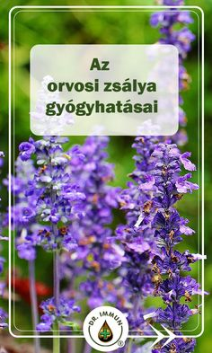 Salvia Officinalis, Health Eating, Herb Garden, Natural Remedies, The Cure, Spices, Healing, Herbs, Plant