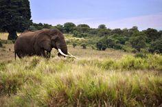 this is majestic.  (ngorongoro crater, tanzania)