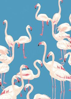 Flamingos Illustration by Gu Siaoyin Flamingo Pattern, Flamingo Print, Pink Flamingos, Flamingo Fabric, Flamingo Party, Motifs Textiles, Textile Patterns, Pattern Illustration, Art And Illustration