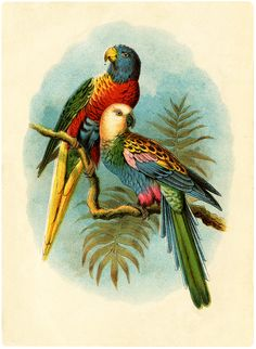 Vintage Parrots Picture - Free from The Graphics Fairy!