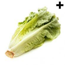 Imagen en la que se ve un cogollo de lechuga tumbado Cabbage, Vegetables, Ethnic Recipes, Food, Lettuce, Vegetables Garden, Meal, Eten, Vegetable Recipes