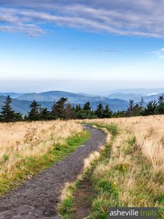 Hike the Appalachian Trail at Roan Mountain in NC, rolling over the grassy balds in the Roan Highlands to phenomenal summit views
