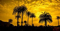 Golden Sunset - Sunset at Mount Abu in Rajasthan, India