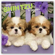 Shih Tzu Puppies 2018 12 x 12 Inch Monthly Square Wall Ca...