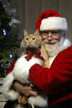 santa clause with cat