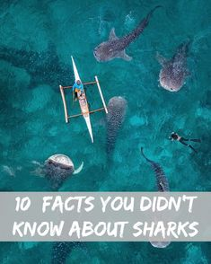 10 Facts About Sharks You Did Not Know - The first sharks lived more than 400 million years ago—200 million years before the first dinosaurs. They have changed very little over the eons.