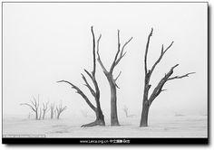 『摄影奖项』TPOY 年度旅行摄影师奖 2014 奖项:自然单幅推荐作品 摄影师:Marsel Van Oosten,简洁而出色的构图,纳米布沙漠里的枯树干。