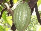 Ambanja - Ouverture du festival de cacao  #ambanja #madagascar #ankify #cacao