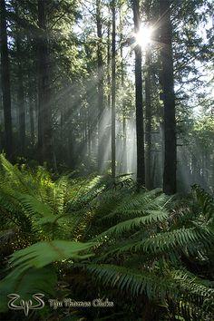 Cascade Head Wildlife Preserve / Oregon Coast
