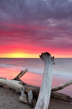 Sunrise over driftwood - East Point Park, Toronto, Ontario