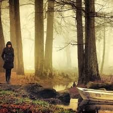 Image result for gif background of misty woods
