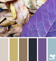 design-seeds.com