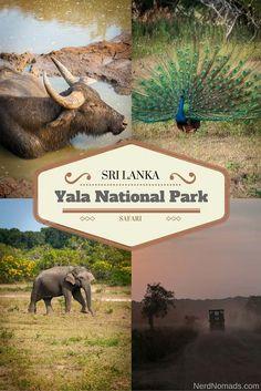 Into the Wild at Yala National Park in Sri Lanka