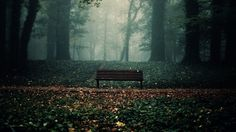 Nature Trees Fog Bench Creative Photography Wallpaper