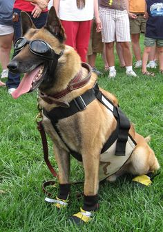 'Scott' a Military Working Dog in protective gear. National K-9 Veterans Day is today (March 13) and we couldn't be prouder of all the military working dogs who serve, drooling or no drooling. Check out the other dog pins on our images board as well. Some military dogs even donate blood!