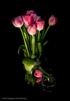 Tulips photographed by Christopher Sargent...