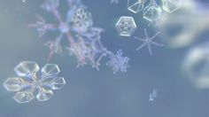 Image result for macro snowflake