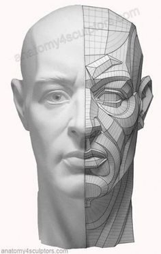 Drawing tutorial male face anatomy 62 Ideas for 2019 - Everything About Charcoal Drawing and Sculpture Facial Anatomy, Head Anatomy, Human Anatomy Drawing, Human Figure Drawing, Anatomy Art, Anatomy Of The Face, Body Anatomy, Drawing Heads, Life Drawing