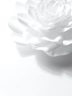 White on White... ~~CRV~~