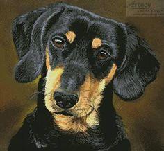 Dachshund Portrait - cross stitch pattern designed by Tereena Clarke. Category: Dogs.