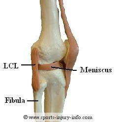 lateral collateral ligament of elbow, lcl of elbow, radial, Human Body