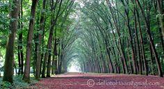 . Caravan, Trunks, Plants, Drift Wood, Stems, Tree Trunks, Plant, Planting, Planets