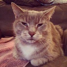 He's not letting on, but he is definitely plotting his revenge on me for taking him back to the vet today
