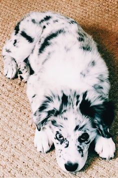 Cute Baby Animals, Animals And Pets, Funny Animals, Cute Dogs And Puppies, I Love Dogs, Doggies, Cute Creatures, Mans Best Friend, Animals Beautiful