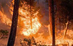 بنزرت: حريق هائل في جبل الحماري بالرفراف #الإذاعة_التونسية #الأخبار  بوابة الإذاعة التونسية   بنزرت: حريق هائل في جبل الحماري بالرفراف  بنزرت: حريق هائل في جبل الحماري بالرفراف #الإذاعة_التونسية #الأخبار