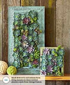 Amazing vertical succulent garden!-- This would be perfect on the wall by my front door.