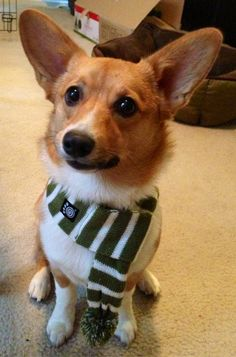 I'm totally getting Toby a scarf! LOL!!!