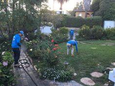 Santa Barbara Best Landscape Maintenance Company Call Now! Landscape Maintenance, Garden Maintenance, Santa Barbara County, Landscape Services, Landscaping Company, Storage Places, Irrigation, Getting Out, Weeding