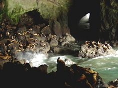 Sea Lion Caves, Oregon