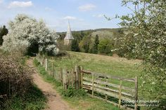 Footpath to Shere, Surrey