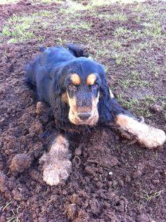 Puppy Louis gardening