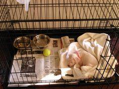 crate potty training new puppy | Make sure to purchase these must-have items in preparation for ...