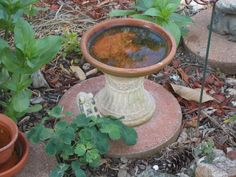 Base found at a thrift store find, the top a flower pot saucer, and hot wax gun was all that was needed to make this birdbath! The finches love this one!