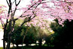 Springtime's grand entrance by *December Sun, via Flickr