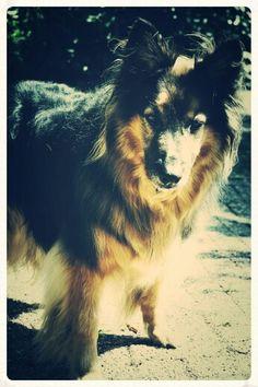 Dirk, my dog!